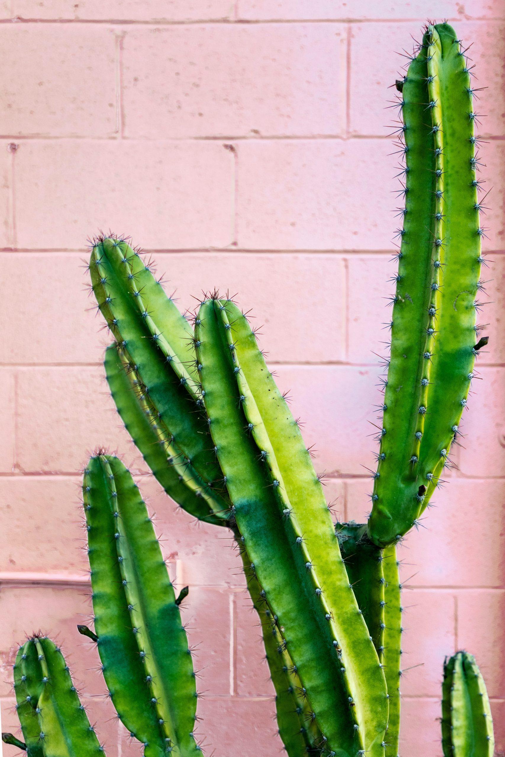Tko je ponovo stavio Alena Kekića u Žiri? Kaktus.